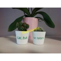 Cactussetje